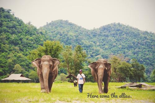 Ellies thailand_0609_8187